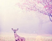 deer dreams - animal photography,  wildlife photo - fog, muted, pink,  texas - photographic art print 8x12