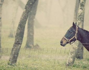 Horse in foggy forest behind fence, Quirky Animal Photos, foggy landscape, modern photography, muted colors