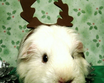 Green & White GUINEA PIG REINDEER Christmas Print - 8x10 Limited Edition Photograph