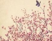 Flower Fine Art Photograph, Pink Magnolias, Floral Art, Bloom, Blue Butterfly, Mixed Media Art, Nursery Art, Girls Room, Pretty, 8x10 Print