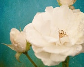 Fine Art Photograph, Flower Photo, White Roses, Macro Art, Creamy, Teal, Shabby Chic, Rose Photo, Home Decor, Botanical, Garden, 8x10 Print
