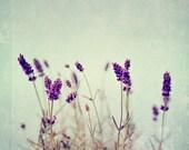 Fine Art Photograph, Lavender Photo, Shabby Chic Art, Purple Flowers, Botanical Art, Teal, Home Decor, Flower Photo, Square 8x8 Print
