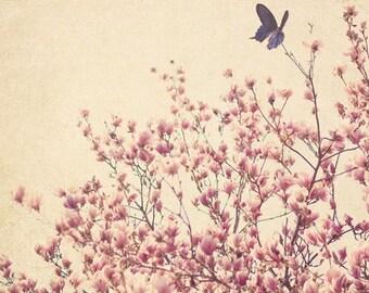 Fine Art Print, Pink Magnolias, Flower Art, Blooms, Blue Butterfly, Mixed Media Art, Nursery Art, Butterfly Print, Botanical Print