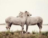 "Horse Art, White Horse Decor, Nature Photography, Large Wall Art Print, White Wall Decor, Fine Art Photography Print ""Embrace"""