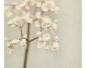 "Romantic Botanical Print, Flower Photography, White Floral Fine Art Print, Nature Photography, 8x10 Nature Print ""Beyond the Pale"""