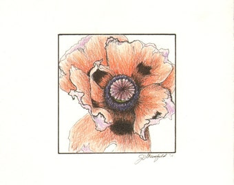 Late Bloom-Framed  Miniature Poppy Drawing  by J Greenfield