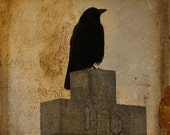 Vintage colors, Gothic Raven, gothicrow, antiqued style image, crow art, aged art - Perceptive crow