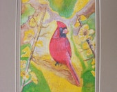 Cardinal Watercolor Fine Art Print, Double Matted In Beige, Bird, Nature, Illustration, Painting