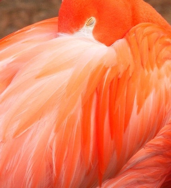 Flamingo Close Up Abstract Pink Feathers Philadelphia Zoo Photograph