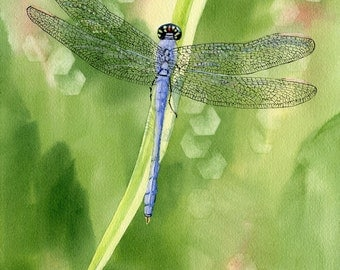 Blue Dragonfly giclee print