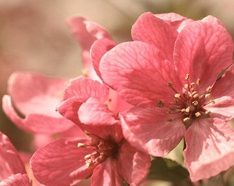 Pink Flower Photography, Bedroom decor, bedroom photo, apple blossom flowers, pink wall art