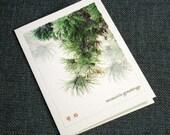 Asian-Inspired Pine Bough Holiday Cards - Handmade Christmas Card Set, Korean or Chinese Writing, North Carolina Photography Illustration