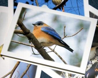 The Backyard Birds Collection