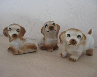 Basset hound puppies 3