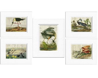 Audubon Birds print set, Audubon prints
