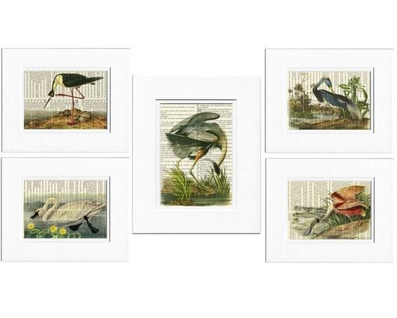 Audubon Birds print set, Audubon prints