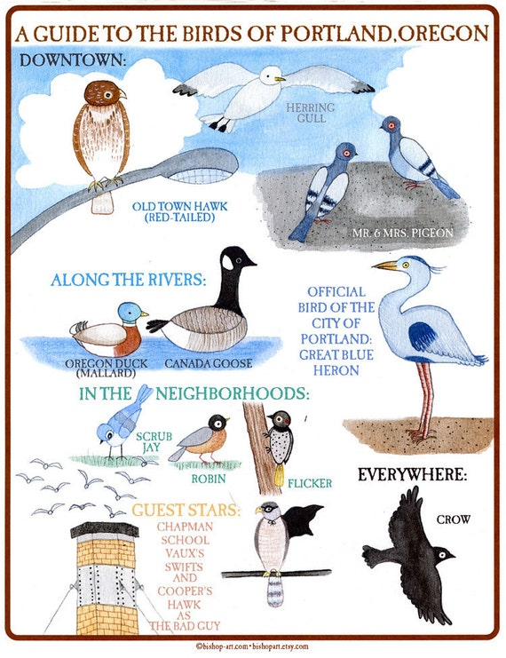 A Guide to the Birds of Portland Oregon print