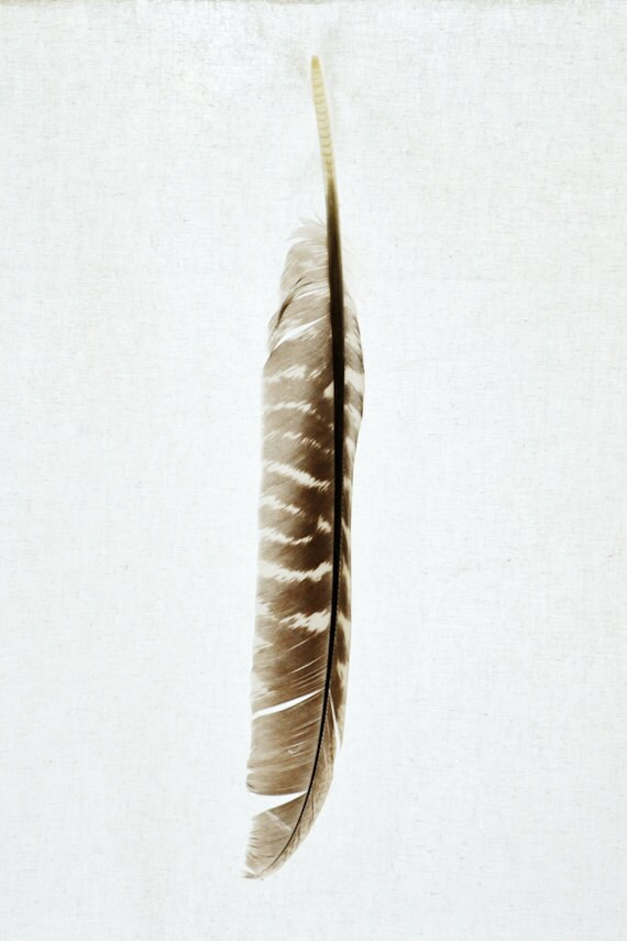 Feather Art Print - Living Room / Office Wall Decor - Elegant