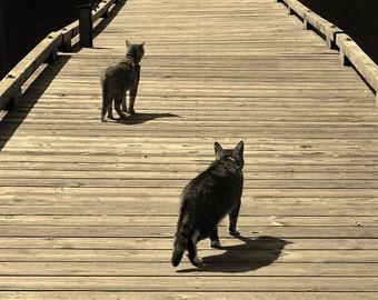 Traveling Cats Metallic Photograph