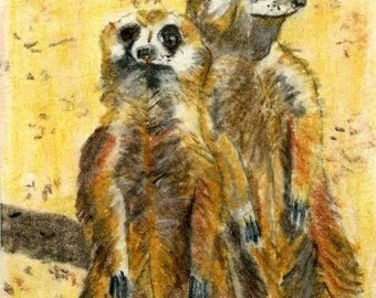 ACEO Cute Meercats Fine Art Repro from my Color Pencil Painting