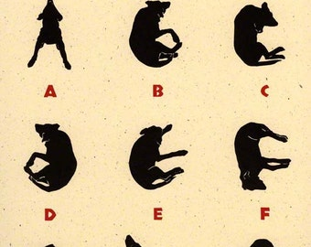 Black Morgan, A Labrador Alphabet