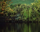 White HORSE Reflected in Autumn Pond, Pocono Mountains- BLANK 5 X 7 NOTECARD frameable Art Photo with Free Origami Crane