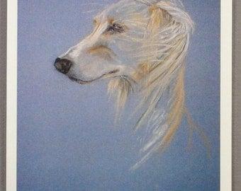 Saluki Hound Dog Art Note Cards By Cori Solomon