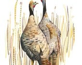 Wild Turkeys in the Straw - Archival print of watercolor, bird art