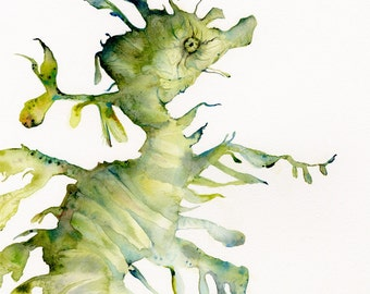 Leafy Sea Dragon - archival print