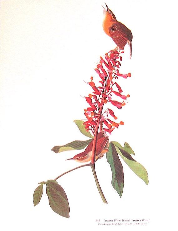 Large 2 Sided 1981 Vintage Audubon Bird Book Plate Bewick's Wren, Carolina Wren