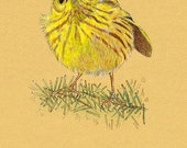 All Occasion Greeting Card Yellow Warbler Bird 5 x 7 inches