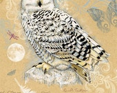 Snowy Owl Bird Birthday Greeting Card 5 x 7 inches