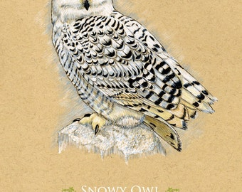 Snowy Owl Bird Giclee Art Print   8 x 10 inches