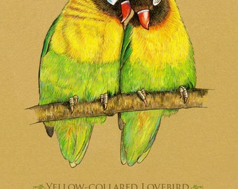 Lovebirds Art Print Giclee 8 x 10 inches. Yellow Collared Lovebird