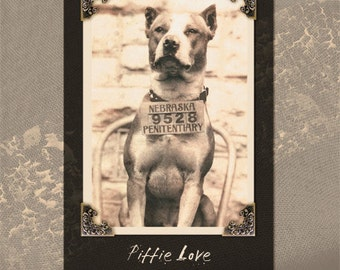 American Pit Bull Terrier Dog Art Giclee Does NOT come framed
