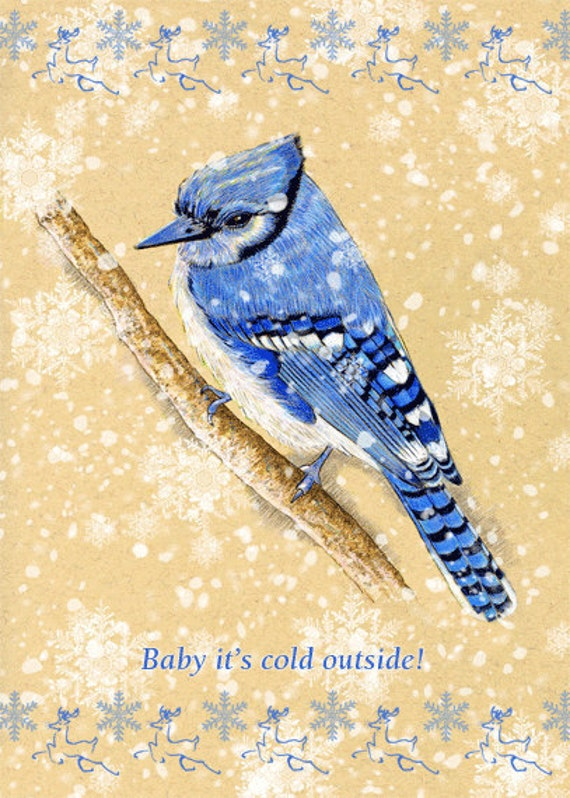 Bluejay  Bird Greeting Card   Baby It's Cold Outside 5x7 inches
