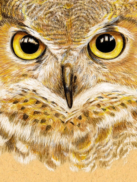 Great Horned Owl 12 x 16 inch Giclee Poster