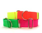 """1.5"""" Dog Collar The Cullen martingale or buckle collar"""