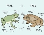 frog vs. toad art print: clash of the anurans