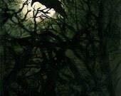 The Raven: Illustration Inspired by Edgar Allen Poe.