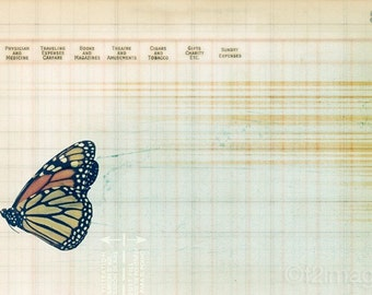 8x12 Monarch