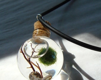 SALE! Orb Marimo Moss Ball Mini Ecosphere Terrarium Live Plant Necklace