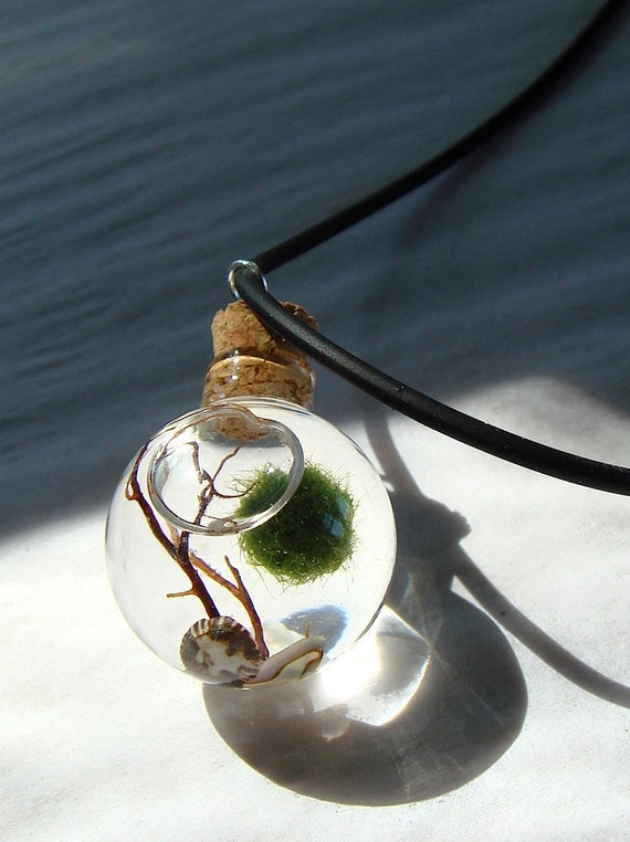 Marimo Moss Ball Planted Tank Orb Marimo Moss Ball Mini