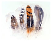 1. Feather art - Watercolor PRINT - Feather Illustration Feather Drawing Bird Art Watercolor Feathers Still Life of Animal Art - Birds