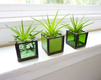 Air plant holder - Three stained glass cubes - Green with Tillandsia Air Plant