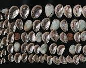 36 Teeny Tiny Abalone Shells Three Dozen, Plus a Bonus Gift of These Beauties