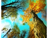 Stepping out, 4x4 inches, art, photography, nature, turquoise wall decor, fall decor, autumn trees, #Turquoise wall art