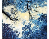 China blue,10x10, Original Signed, Fine Art altered photograph, full moon, delft blue, trees, nature decor, navy blue - dahliahousestudios