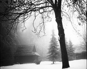 Winter in Rural Slovakia, Photography Giclee Art Print, Collectible, Film, Analog, Square Format, Landscape, Large Art, Village, Tree