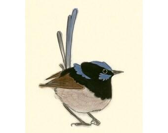 """Australian bird art print -  4 for 3 SALE Christopher Wren II - 4"""" x 6"""" superb blue fairy wren print"""